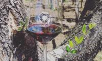 Une fontaine à vin gratuite et illimitée en Italie. Non vous ne rêvez pas !