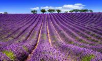 Les plus beaux endroits à visiter en Provence