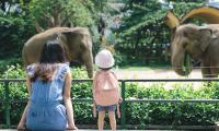 Zoos : 6 superbes parcs à visiter en ligne