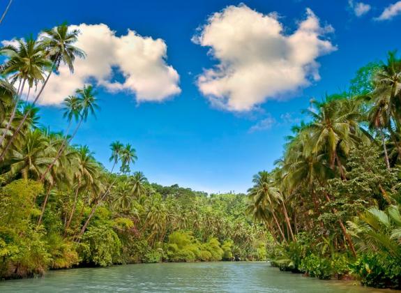 Refoorest : participez à la reforestation en navigant simplement sur internet !