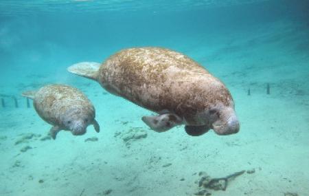 Le Dôme équatorial : la nouveauté du Zoo en 2020 !