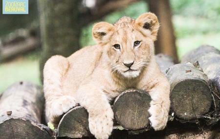 A partir du 30 Mars,visitez le Zoo de Beauval à bord de télécabines