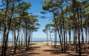 Landes, campings : 8j7n en mobil-home + piscine, proche plage, jusqu'à - 70%