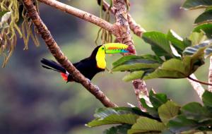Costa Rica : circuit 14j/13n en hôtels + pension selon programme + visites + vols, - 14%