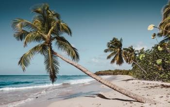 En 2019, Norwegian ne desservira plus les Antilles