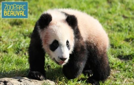 Beauval : vente flash, 2j/1n en résidence 3* avec piscine + entrée au Zoo