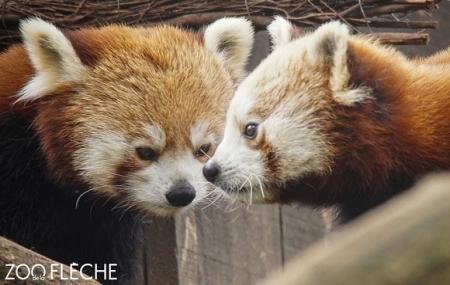 Zoo de la Flèche : vente flash, 2j/1n en hôtel 3* + petit-déjeuner + entrée au Zoo