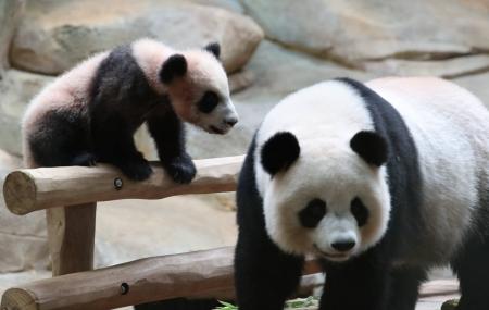 Zoo de Beauval : vente flash, 2j/1n en résidence 3* + petit-déjeuner + entrée à Beauval
