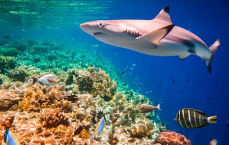 Aquarium La Rochelle : vente flash, 2j/1n en hôtel 3* + petit-déjeuner + visite, - 40%