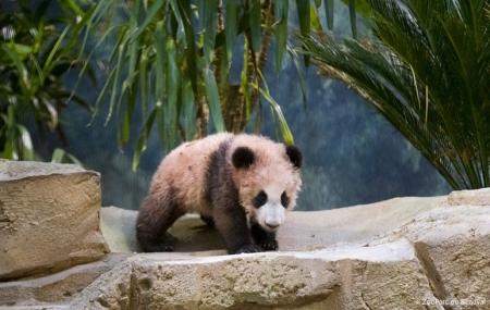 Zoo de Beauval : vente flash, 2j/1n en rés. 3* + entrée au zoo, frais de dossiers OFFERTS