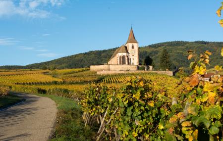 Strasbourg : rallye touristique sur la route des vins, demi-journée ou journée