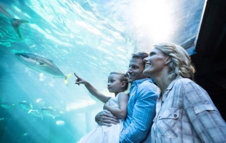 Activités & loisirs aux enchères : montgolfière, pilotage, aquarium... à Paris, Lyon, Marseille...