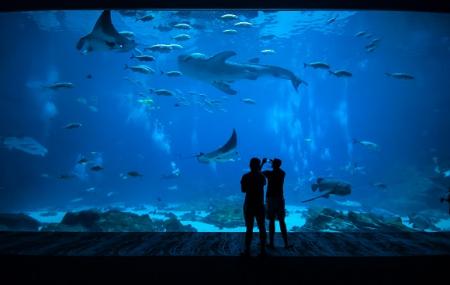 Nausicaa, Boulogne-sur-mer : billetterie pour le plus grand aquarium d'Europe