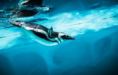 Aquarium Sea Life Paris : billets d'entrées pour 2 personnes