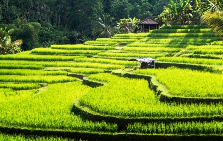 Bali : vente flash combiné 8j/7n, hôtels 4* & 5*, vols & transferts inclus, - 60%