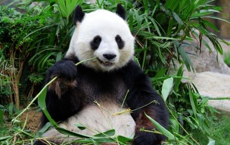 Zoo de Beauval : 2j/1n en appart'hôtel 3* + petit-déjeuner + entrée au parc, - 40%