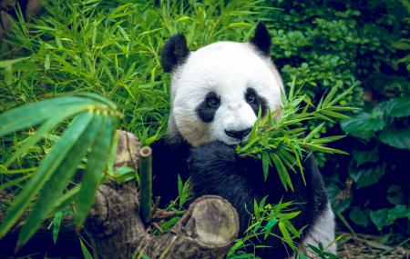 Zoo de Beauval : week-end 2j/1n en résidence 3* + petit-déjeuner + entrée au parc, - 35%