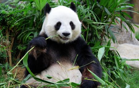 Zoo de Beauval : week-end  2j/1n en appart'hôtel 3* + petit-déjeuner + entrée au parc, - 40%