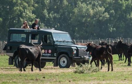 Camargue : week-end 2j/1n en résidence 3* + safari en 4x4, - 30%