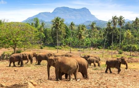 Sri Lanka : circuit 11j/8n en hôtels 3* + pension + excursions & vols