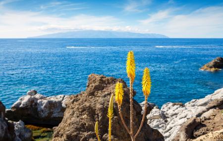 Canaries, Tenerife : séjour 8j/7n en hôtel 4* proche plage, tout compris + vols