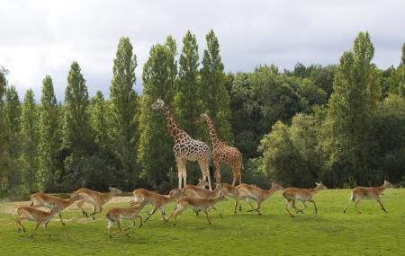 Zoo de Thoiry :  week-end en hôtel 4* + petit-déjeuner & entrée au parc, dispos été