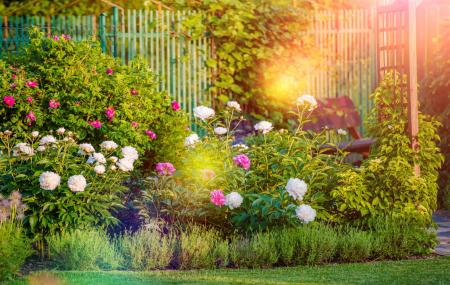 Jardin : plantations, mobiliers, accessoires... jusqu'à - 70%