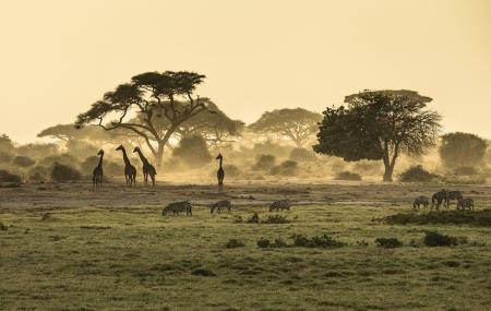 Kenya : vente flash combiné 7j/6n à 11j/10n en hôtel 4* tout inclus + safari & vols, - 39%