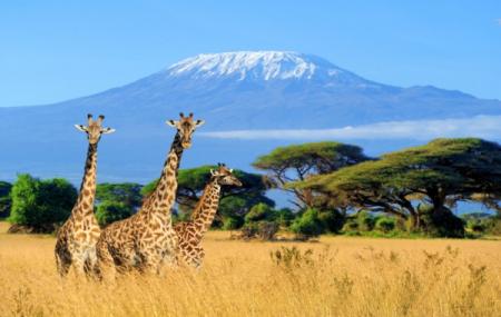 Kenya : 8j/7n en hôtel 5* en demi-pension + safari + vols & transferts