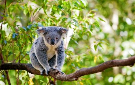 Zoo de Beauval : vente flash, week-end 2j/1n en résidence + entrée au parc