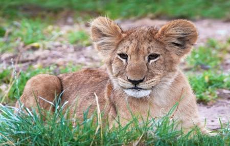 Zoo La Palmyre :  vente flash, week-end  3j/2n en résidence 3* + entrée au parc