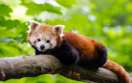 Zoo de Beauval : week-end 2j/1n en appart'hôtel + petit-déjeuner + entrée au parc, - 40%