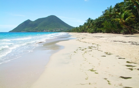 Antilles : vols A/R Air Belgium vers La Guadeloupe & La Martinique dès 401 € !