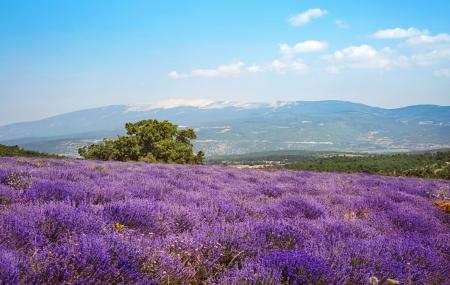 St-Rémy de Provence : week-end 2j/1n ou plus en hôtel 4*