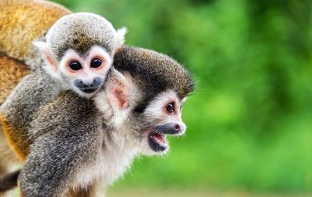 Zoo de la Flèche : 2j/1n en appart'hôtel + petit-déjeuner + entrée au parc, - 30%