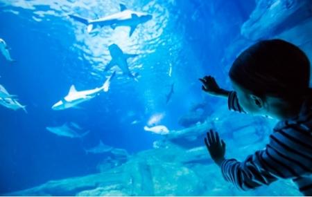 Aquarium de Paris : enchère, 2 billets à partir de 1 euro