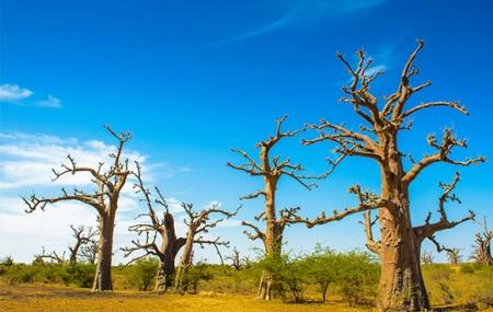 Sénégal : circuit 9j/7n en pension complète, excursions, sites UNESCO + vols