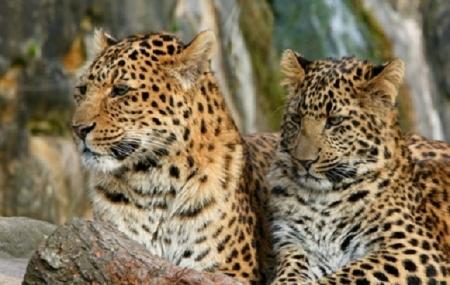 Zoo de Thoiry : 2j/1n en appart'hôtel + petit-déjeuner + entrée au parc, - 40%