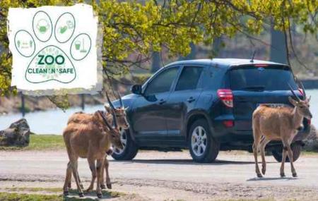Zoo Safari de Thoiry : safari en voiture ouvert du 30 mai au 1er juin
