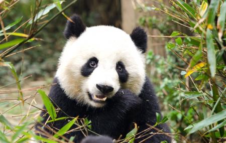 Zoo de Beauval : 2j/1n en résidence/hôtel 3* + entrée au parc, - 35%