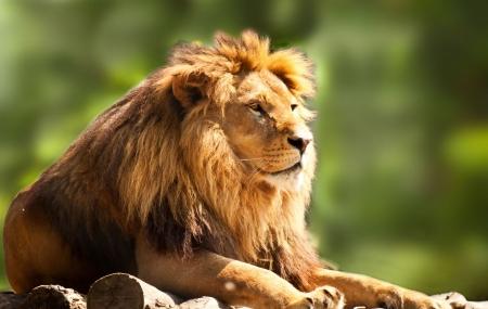 Zoo de la Palmyre, Atlantique : 2j/1n en hôtel + petits-déjeuners + entrée au parc, - 40%