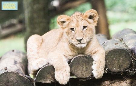 Zoo de Beauval, dispos été : vente flash, 2j/1n en résidence 3* + entrée au parc, - 35%