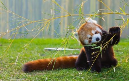 Zoo de beauval vente flash 2j 1n en appart 39 hotel for Appart hotel zoo de beauval