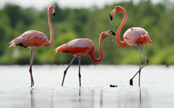 10 activités à faire à Djerba ! - L'île des flamants roses
