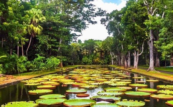10 raisons de partir à l'Île Maurice en basse saison - Découvrez la richesse préservée de la nature mauricienne !
