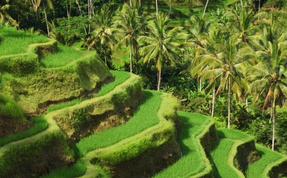 10 raisons de visiter Bali - Le naturel des terrasses de riz