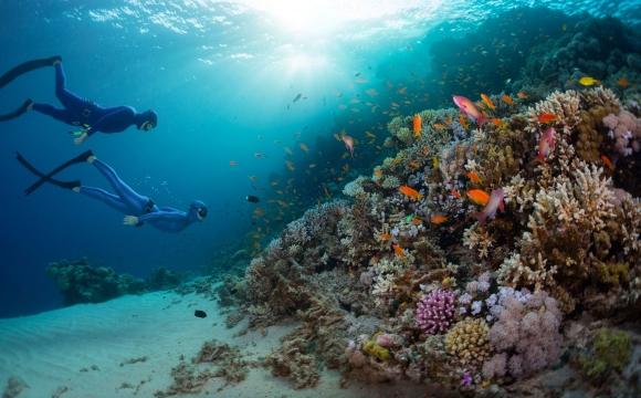 10 voyages à faire une fois dans sa vie - Plonger sur la Grande Barrière de Corail