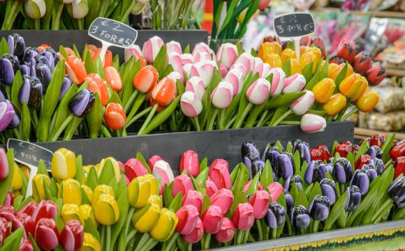 10 activités gratuites à faire à Amsterdam - Bloemenmarkt, le marché de fleurs