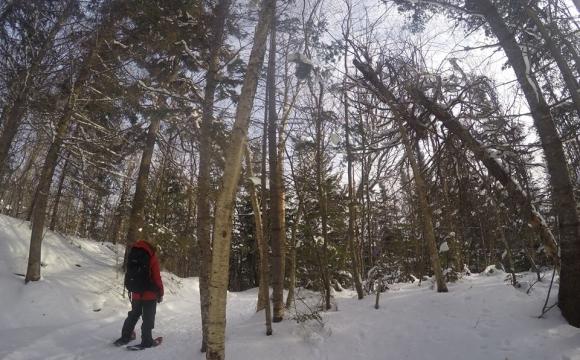10 visites immanquables au Québec par Bird of Passage America - Le Parc National de Mont Tremblant