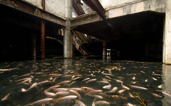 10 lieux qui font frissonner - Un centre commercial abandonné à Bangkok